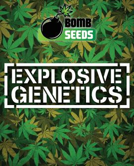 BS-generic