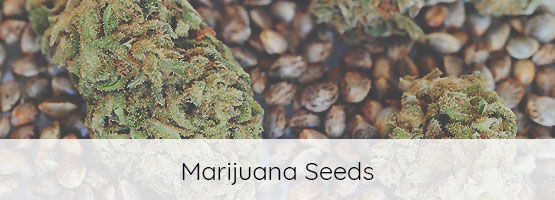 selection of marijuana seeds