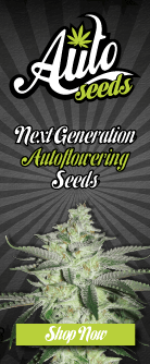 Marijuana Seed Bank Find The Best Cannabis Seed