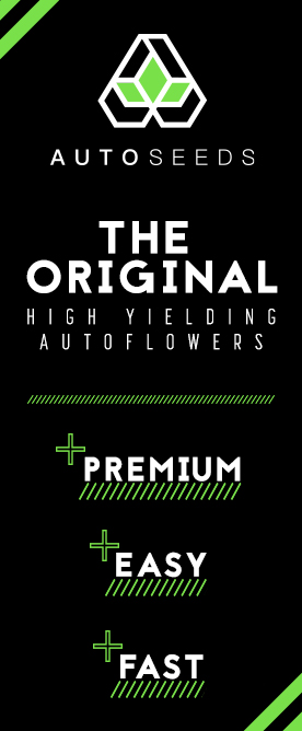 auto marijuana seeds