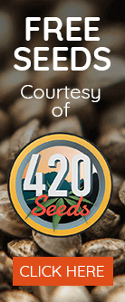 Free seeds from 420 Seeds