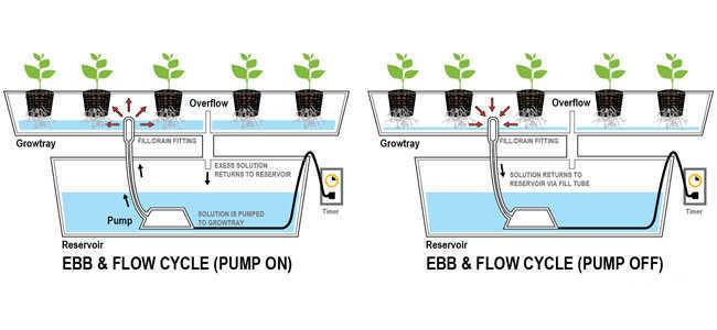 Ebb and Flow Marijuana Growing System