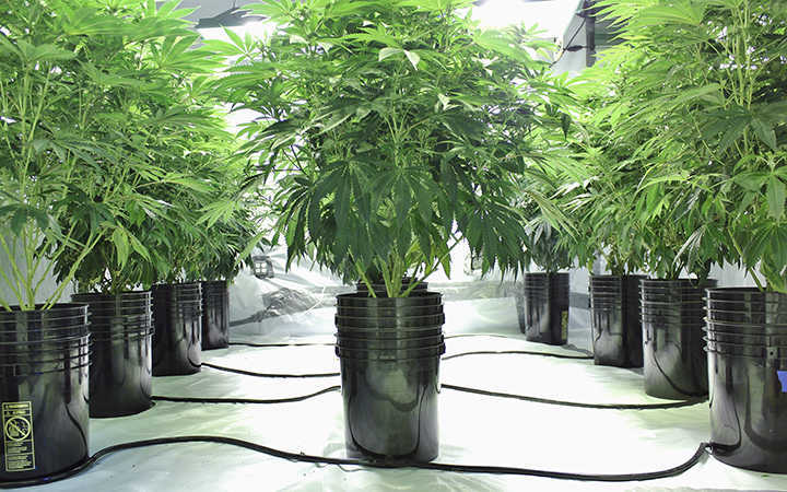 Complete Hydro Grow Room