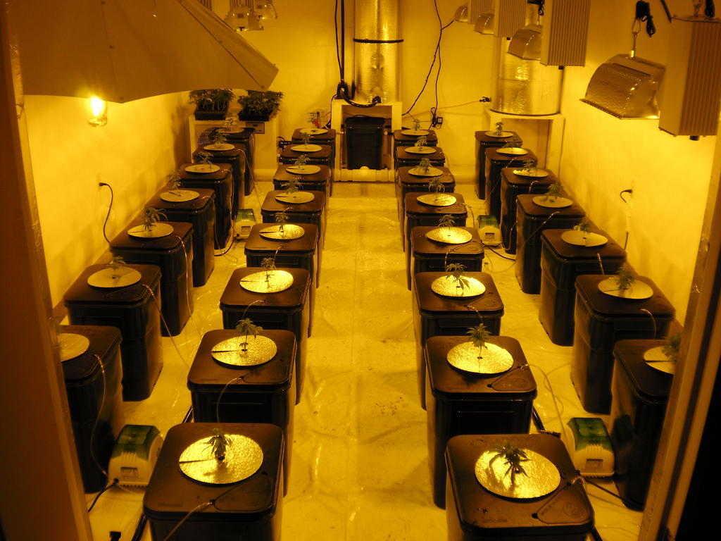 Marijuana Grow Room Setup