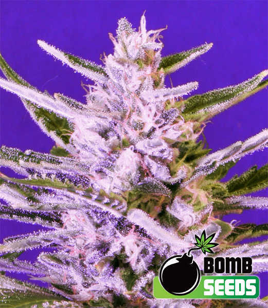 Ice-Bomb-Seeds