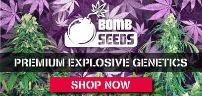 bomb-seeds-banner