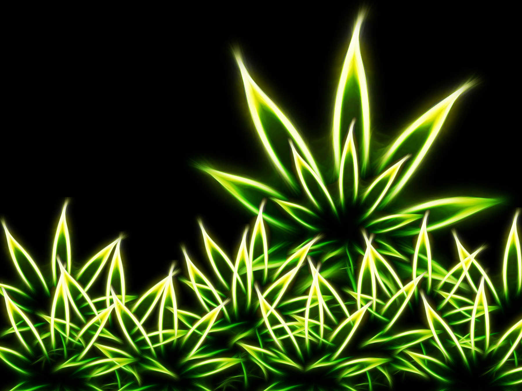 Neon Weed