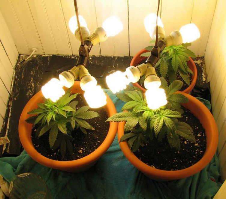 marijuana indoor grow