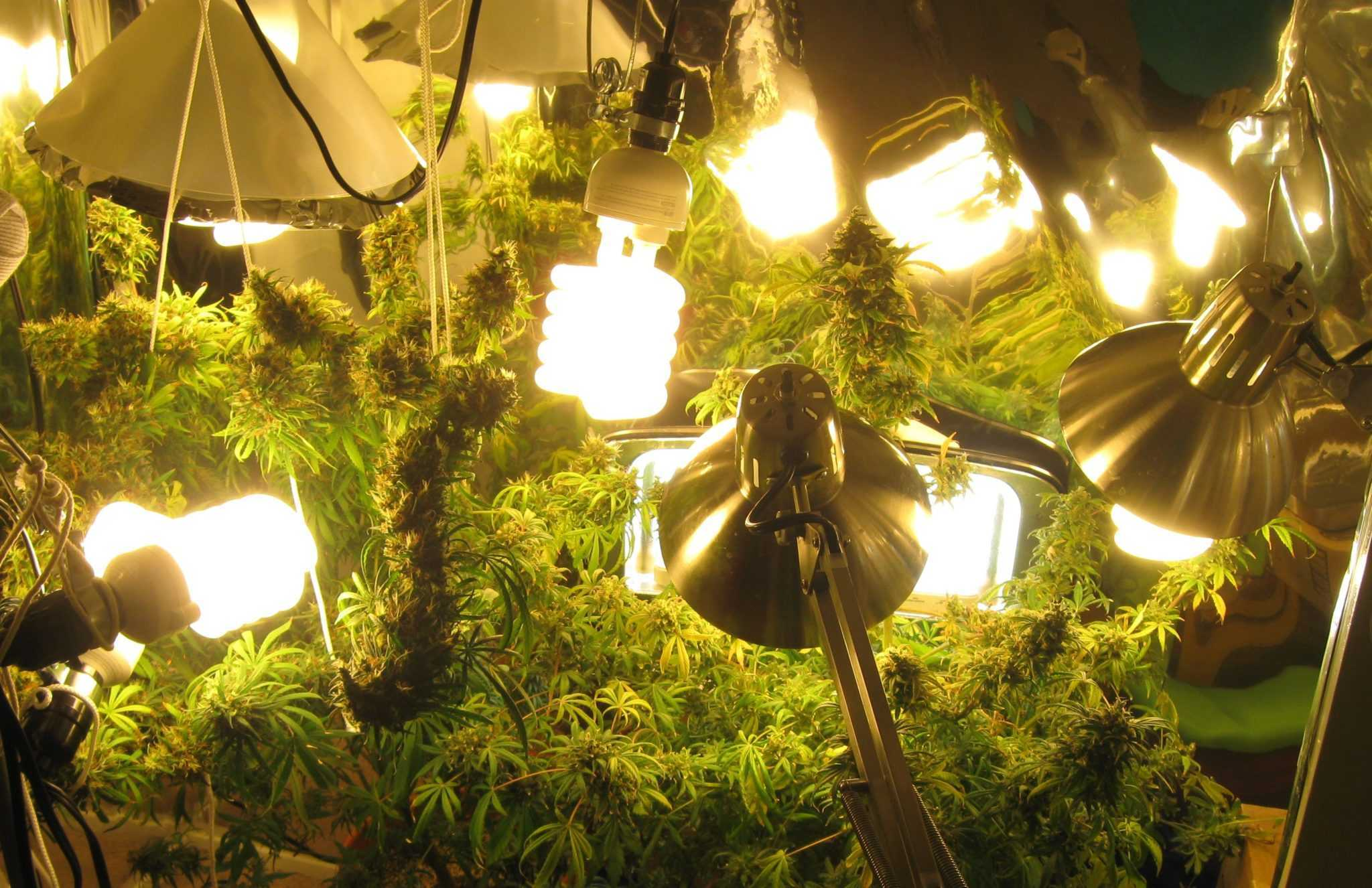 marijuana lights