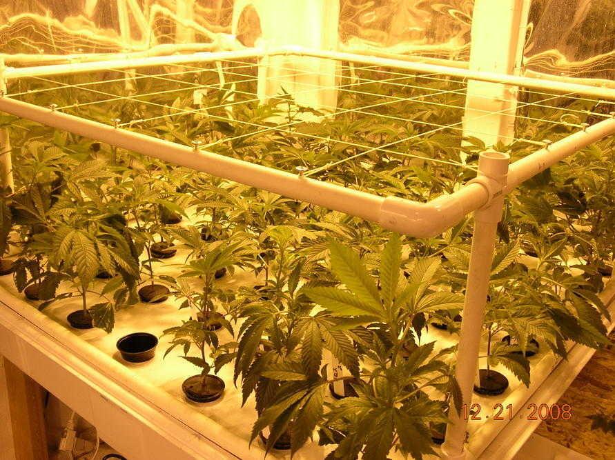 imarijuana-smart-grow-pots
