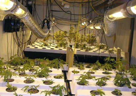 marijuana hydro grow room