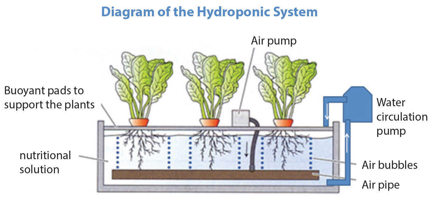 set-up-marijuana-hydro-system