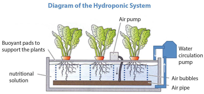 Easy Marijuana Hydro Setup Diagram