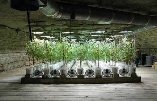 Professional Marijuana Hydro Setup