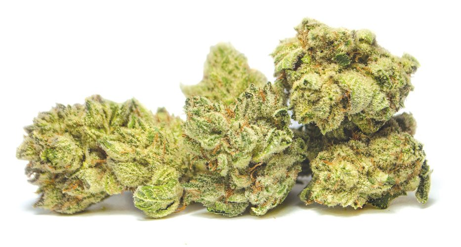 Gorilla Glue marijuana seeds