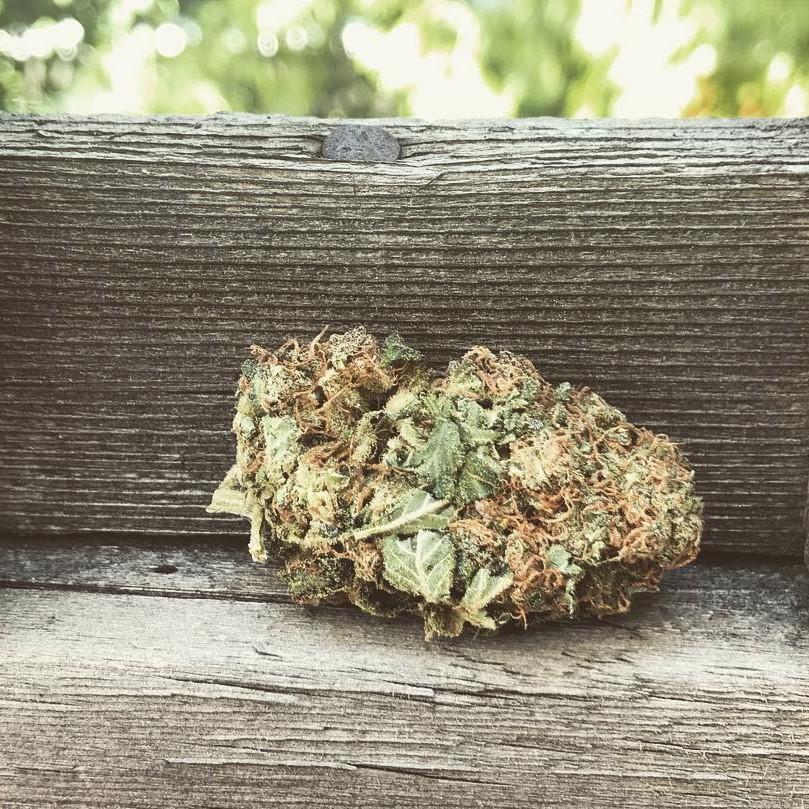 Hindu Kush marijuana seeds