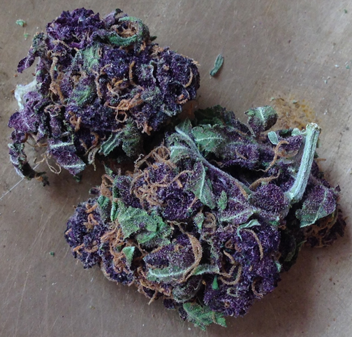 Purple Power marijuana seeds