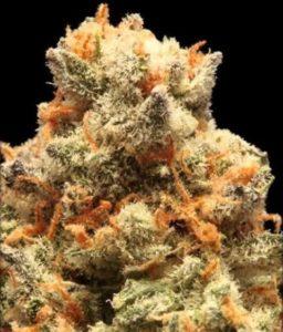 Pez marijuana bud