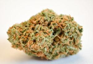 Lemon meringue marijuana bud
